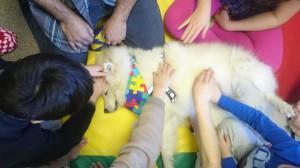 Autisme gr chien